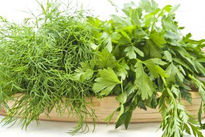Пряные и лечебные травы творящие волшебство